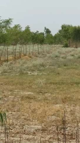 I'm selling this on #OLX: Agriculture Land