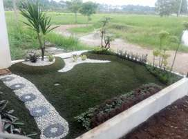 Tukang pembuatan taman-jual tanaman pelindung tabebuya