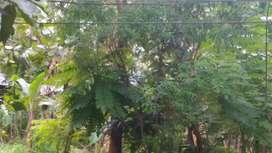 6ct House Plot, Kolazhy-Tiror, 7km Thrissur. 100m Shornur Highway 5Lk