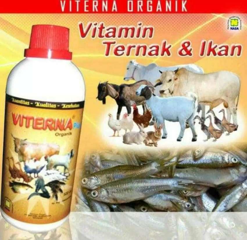 Viterna ( vitamin ternak nasa) 0