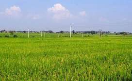 AGRICUTORE LAND FOR SALE