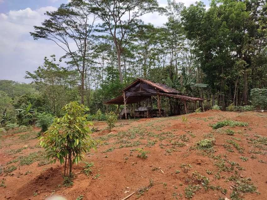 Dijual tanah di jumantono ditanami durian