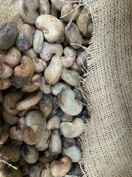 Need female accountant for cashew factory