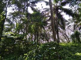 2 acres land is for sale at Naduvil Taliparamba