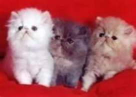 All type cat available 8000 starting price
