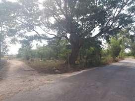 tanah lokasi strategis pusat kota tambolaka