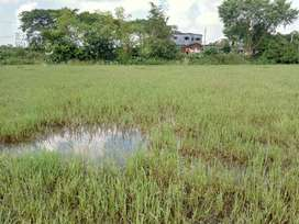 10 Bigha Agricultural  land sell in orgram,Bardhaman