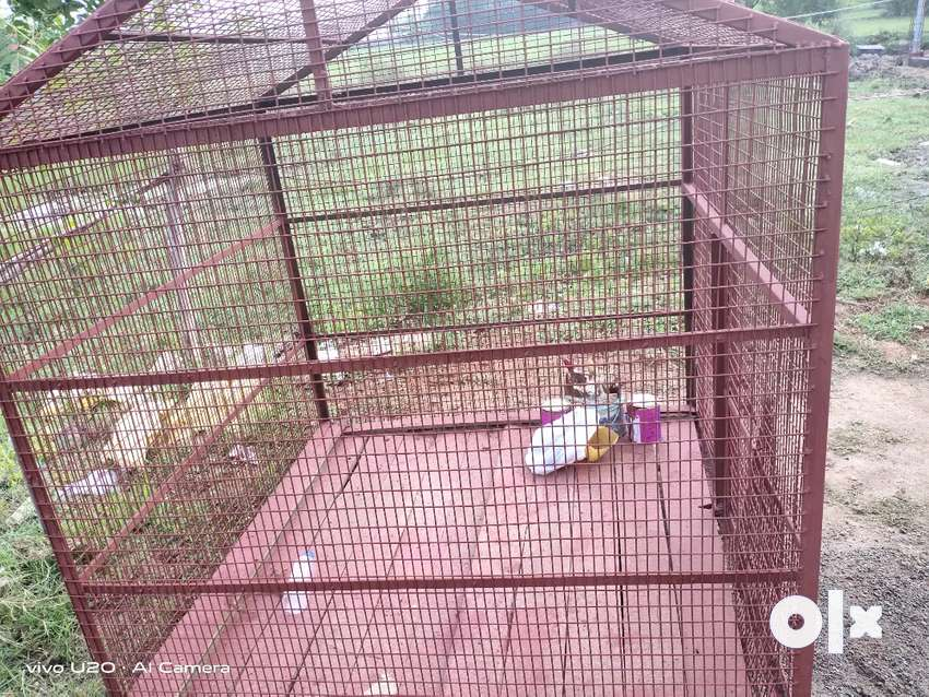 Big cage for all breeds 0