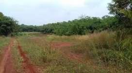 Tanah seluas 9 ha