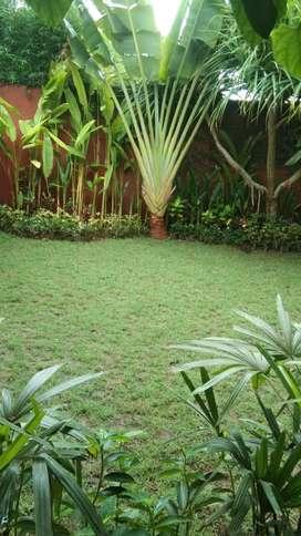 Jual tanaman hias & rumput +pasang