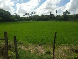 A well established Agriculture land for commercial purposes in future.