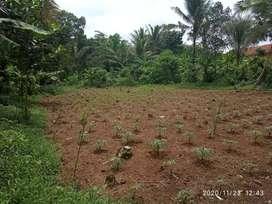 Tanah dikerjasamakan pertanian perkebunan peternakan