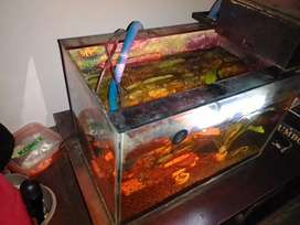 Aquarium kaca 3 dimensi ukuran banyak bonus, 30x20