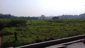 1.43 Acre Land for Sale in Desom - Aluva