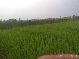 Jual Tanah Sawah katapang Bandung