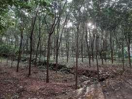 30 cent plot kadathy pallithazham, 4km from muvattupuzha town