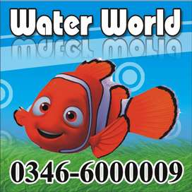 WaterWorld Fish Aquariums Gujrat