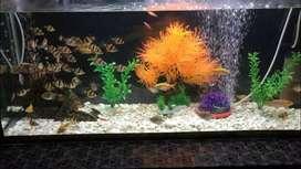 Aquarium full setup with fishes