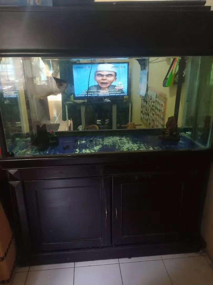 Arwana Golden Red + Aquarium 0