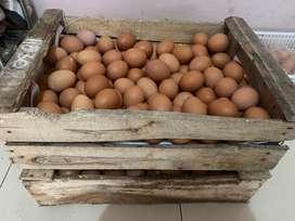 Telur ayam negeri fresh