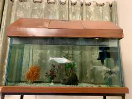 Fish aquarium with fishes and stand