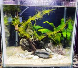 Ready to Go Planted aquarium