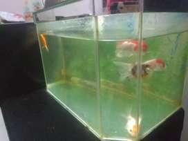 Aquarium 30x20x20 fullset