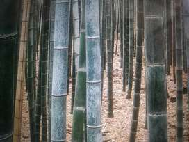 Shat heinaba wa / bamboo athubada pamjei