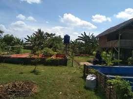 Dijual Murah Tanah Darat 7000m²(SHM)bonus kolam ternak ikan dan saung²