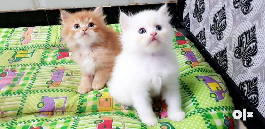 Yes Kittens Available Just Mention Your Name And 0