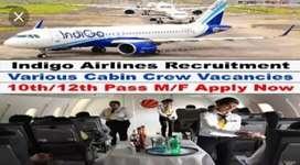 Indigo airlines hiring