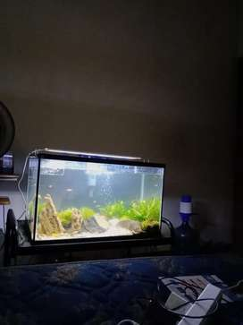 Aquarium Nikita