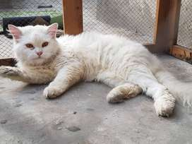 persion MALE 3 Court 1 year 3 Mnths