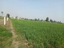 CB marketing offers 8 kanal land for farmhouse