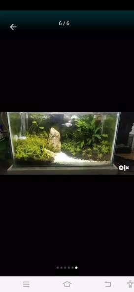 Aquarium full set up done here