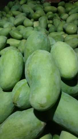Sindhri Mangoes In Reasonable Price
