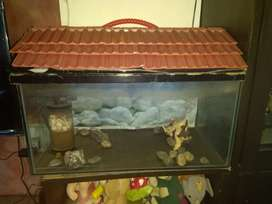 For fish lovers -Fish Tank