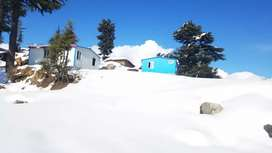 For building guest house Farm house in rich deodar forest.