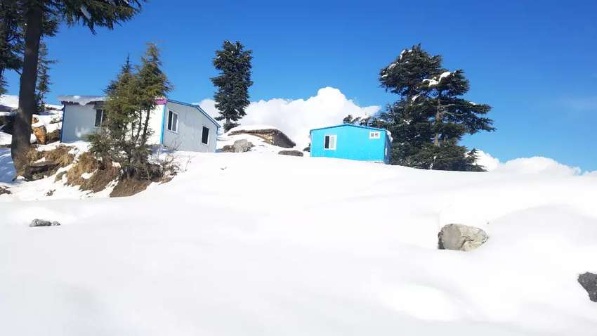 For building guest house Farm house in rich deodar forest. 0