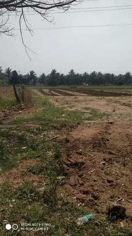 2.5 acre land for sale - Hassan Belur road