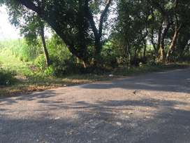 8.25 Bigha Agricultural Land for sale on Main Road, SIRSA, PILIBHIT