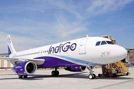 Urgent Requirement IndiGo Airline Duty Ground Staff Cabin Crew and Air