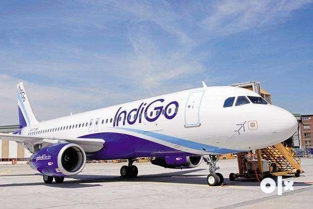 Urgent Requirement IndiGo Airline Duty Ground Staff Cabin Crew and Air 0