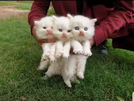 """ Excellent Adorable kittens """
