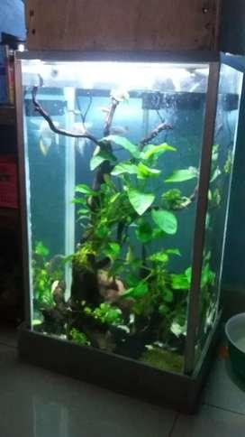 Aquarium Landscape lengkap dg Lampu+Filter Jebo + Phn Anubias