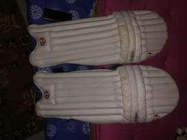 Batting pads of cricket