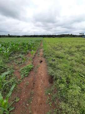 Agriculture land 2 acres for sale