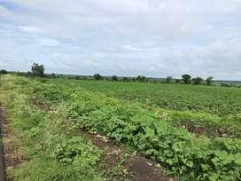 Narayanakhed ,Near Nagalagidda mandal Half acre-10 Lac mango,malabar n