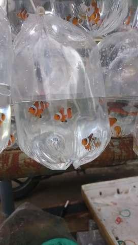 Paket aquarium ikan air laut siap pajang