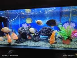 Aquascape Aquarium